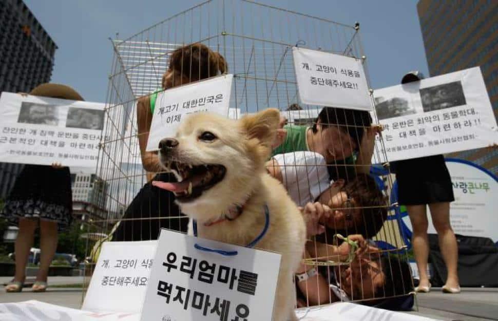 Thế giới: Giết chó có thể phải ngồi tù 5 năm - 2