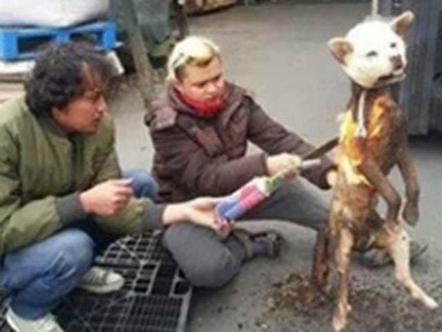 Thế giới: Giết chó có thể phải ngồi tù 5 năm - 3