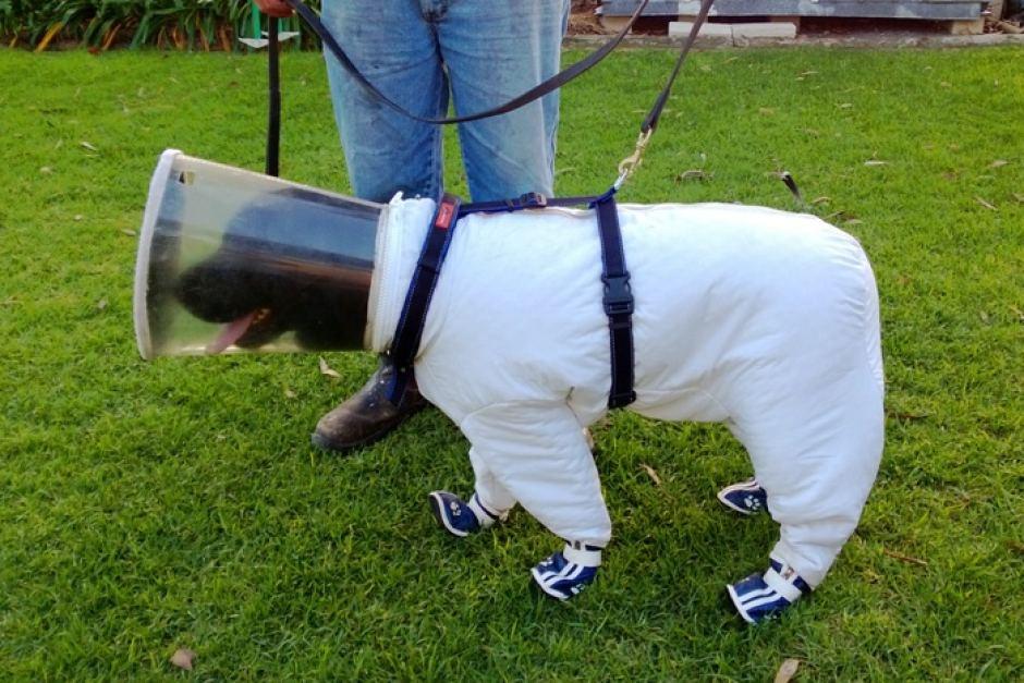 Thế giới: Giết chó có thể phải ngồi tù 5 năm - 4