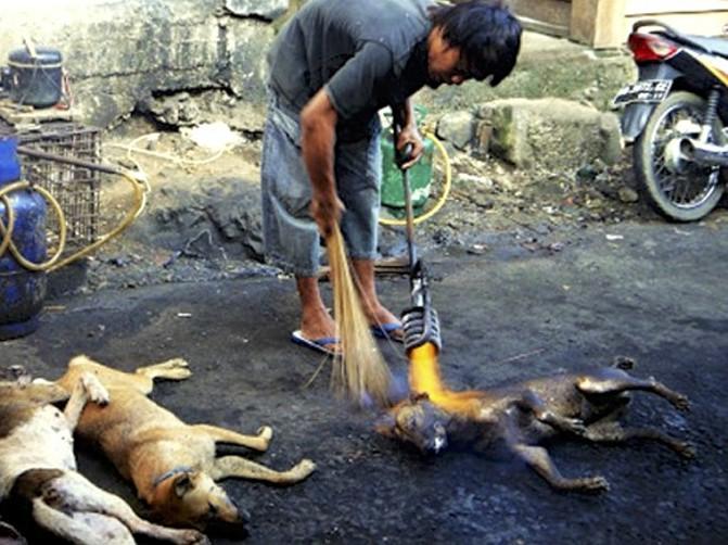 Thế giới: Giết chó có thể phải ngồi tù 5 năm - 1