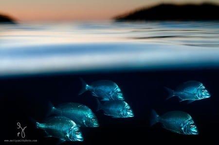 Chiêm ngưỡng loạt ảnh dưới nước đẹp của Australia