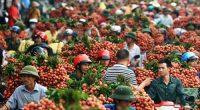 Người tiêu dùng Úc thích trái vải Việt Nam