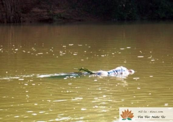 xác chết trôi sông