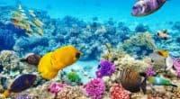 Úc: Đắm mình trong cảnh quan thiên nhiên tuyệt vời ở rặng san hô Great Barrier