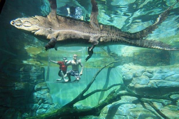 Trải nghiệm cảm giác đứng trong lồng tử thần đùa giỡn với cá sấu khổng lồ 5m - Ảnh 25.