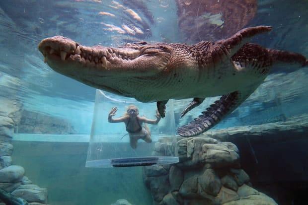 Trải nghiệm cảm giác đứng trong lồng tử thần đùa giỡn với cá sấu khổng lồ 5m - Ảnh 31.