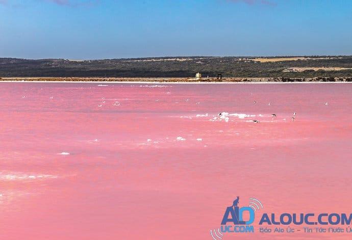 Biển hồng lãng mạn ở Úc khiến chị em mê mẩn - 8