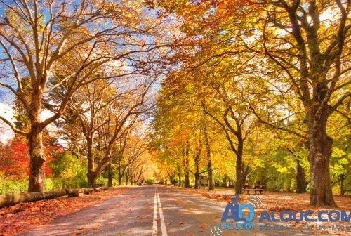 4 lý do để yêu mùa thu nước Úc - 1