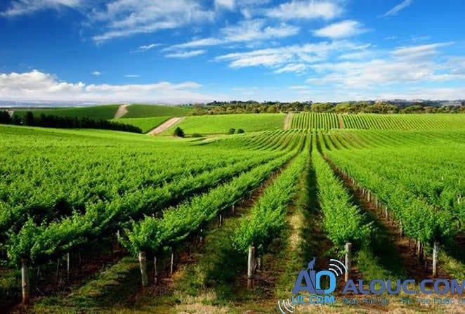 Kết quả hình ảnh cho nông nghiệp úc