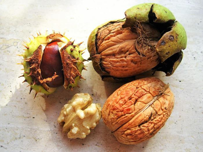 Chestnut and walnut