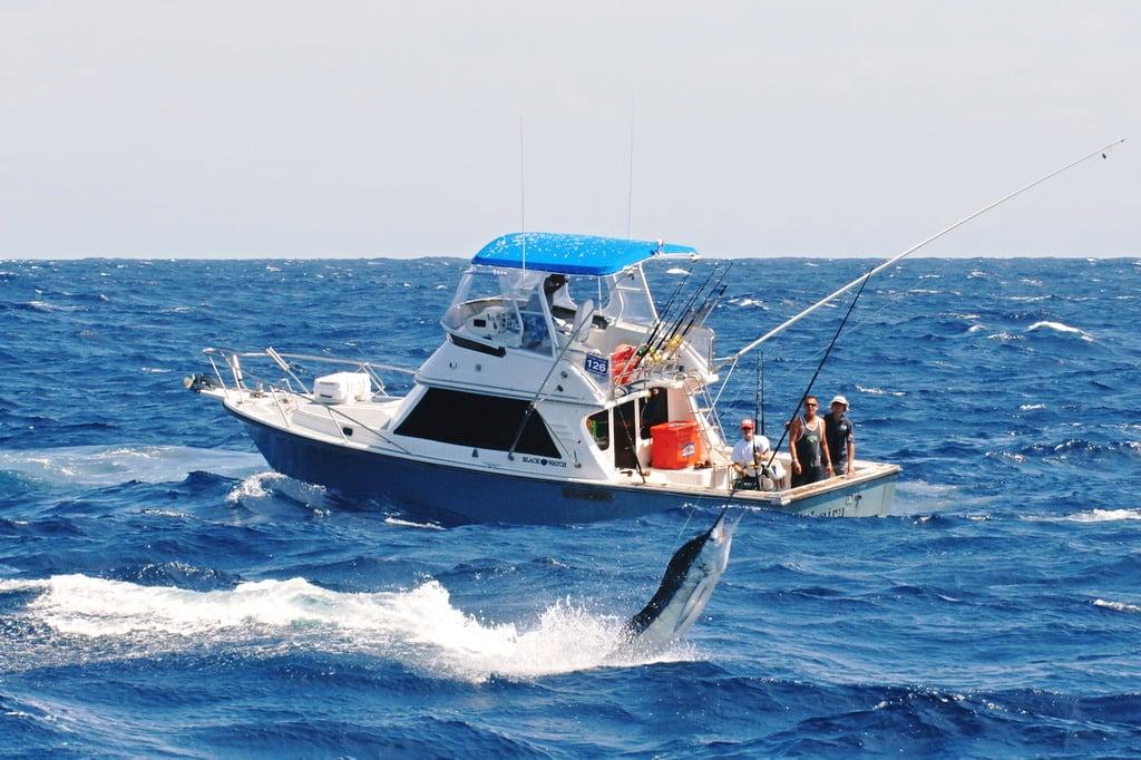 Kết quả hình ảnh cho fishing in Port Stephen