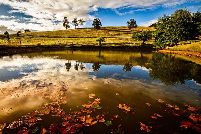 Golden Valley Tree Park, Balingup