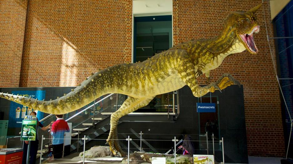 Kết quả hình ảnh cho Museum Western Australia
