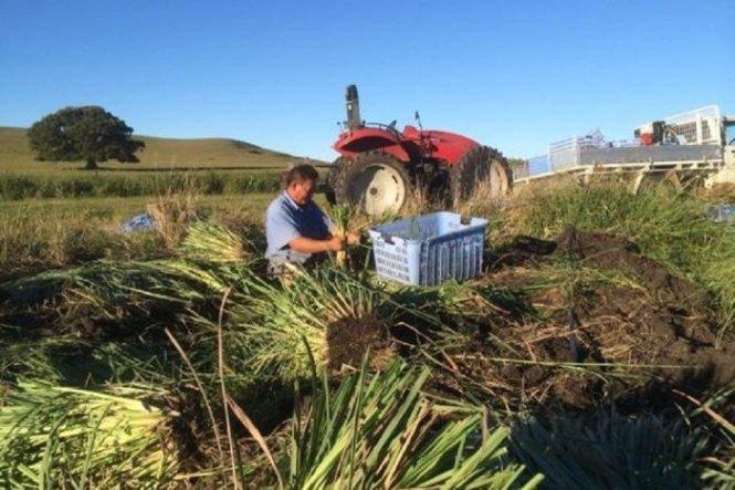 Người Việt thành công nhờ nghề nông ở Úc