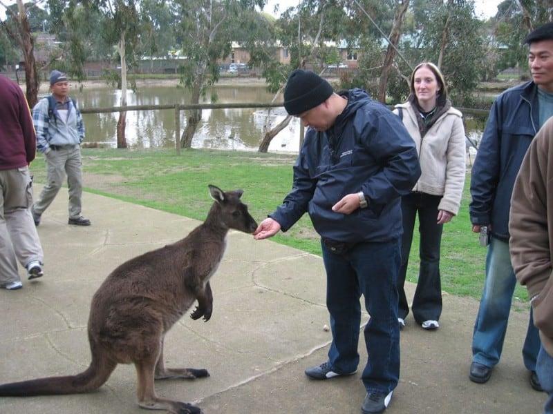 trai nghiem tuyet voi o xu so kanguru