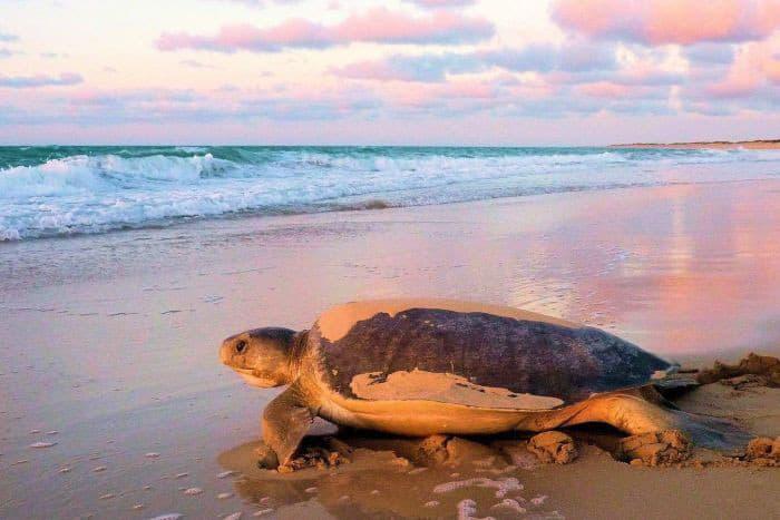 Đi Australia ngủ cùng động vật, bơi cùng cá mập - Ảnh 6.