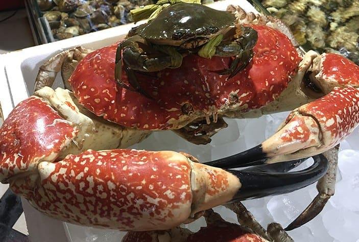 Đại gia Việt mua 1 con cua Úc khổng lồ 8kg giá 60 triệu ăn tất niên - ảnh 1