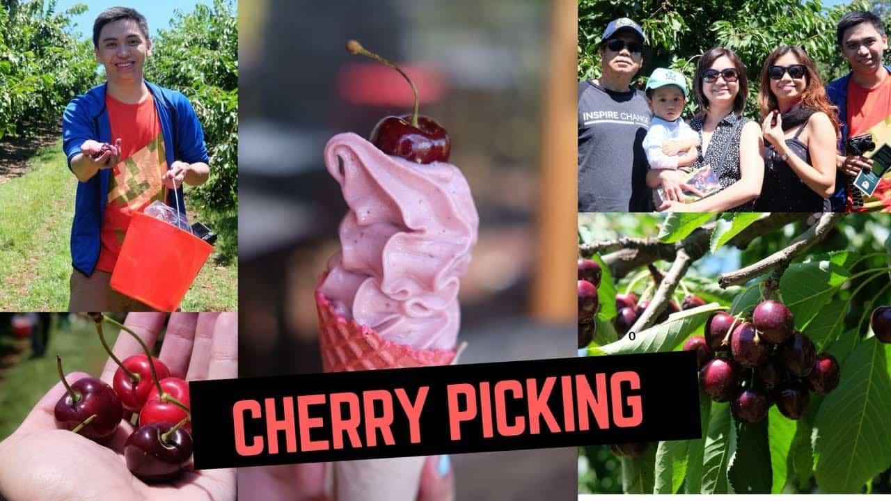 Kết quả hình ảnh cho cherry hill orchards melbourne
