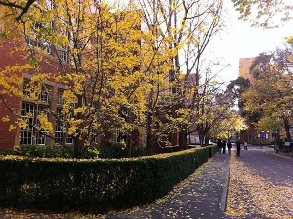 Cả một con đường vàng rực lá mùa thu.