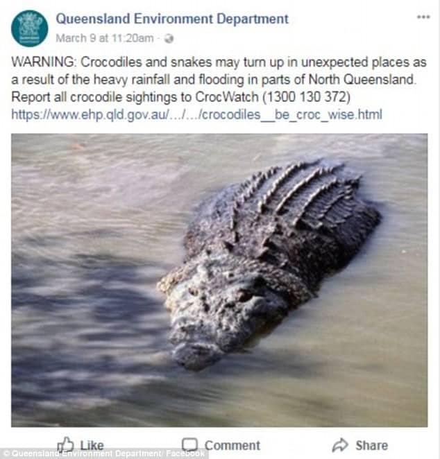 Úc: Mùa mưa mới tới, cơn ác mộng trăn rắn bò vào tận nhà, cá sấu khổng lồ bơi trước cửa khiến người dân lo lắng - Ảnh 1.