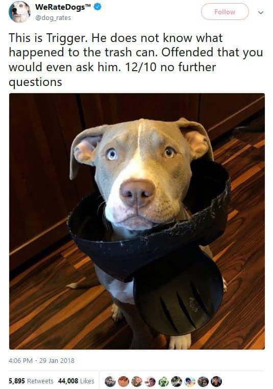 Nhờ nghề đánh giá chó online, anh chàng này vẫn kiếm được cả trăm nghìn USD/năm dù không học Đại học - Ảnh 4.