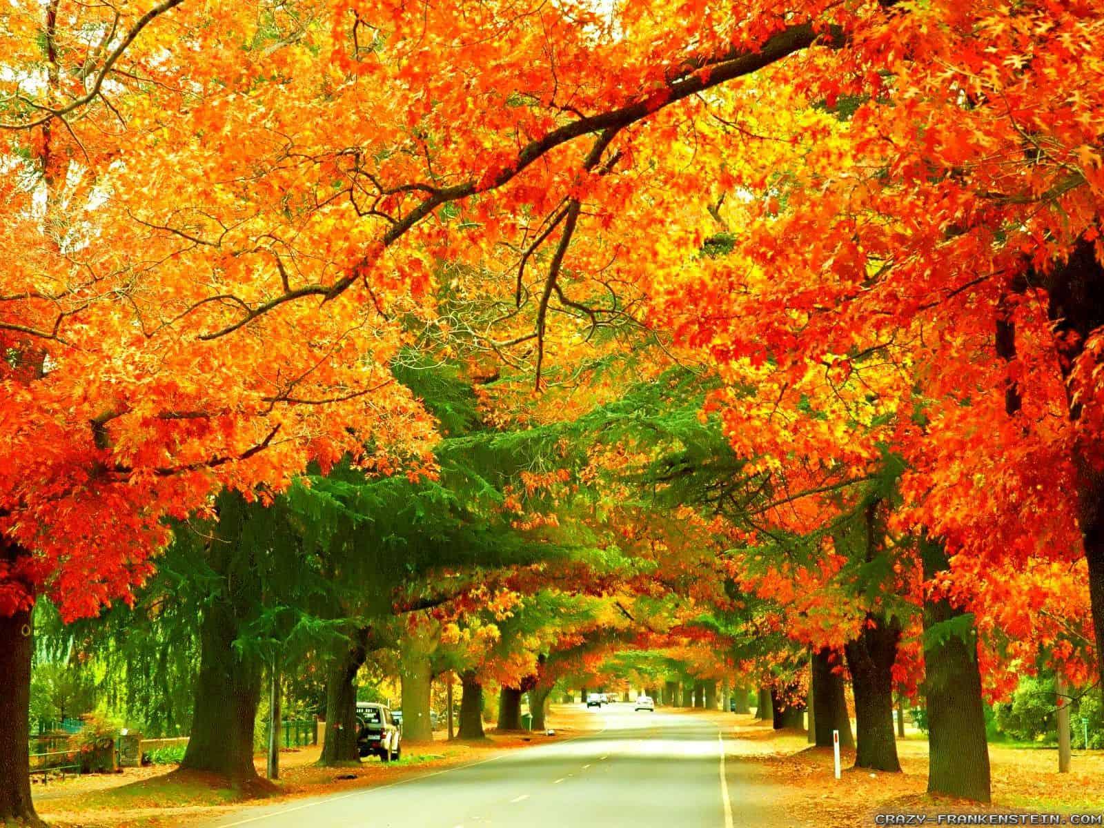 Sắc vàng trên mọi nẻo đường vào mùa thu ở Úc