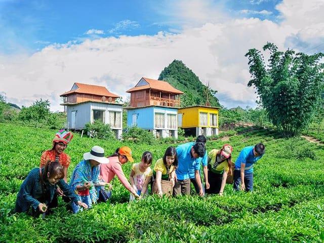 Du lịch nông nghiệp thu hút du khách trong và ngoài nước