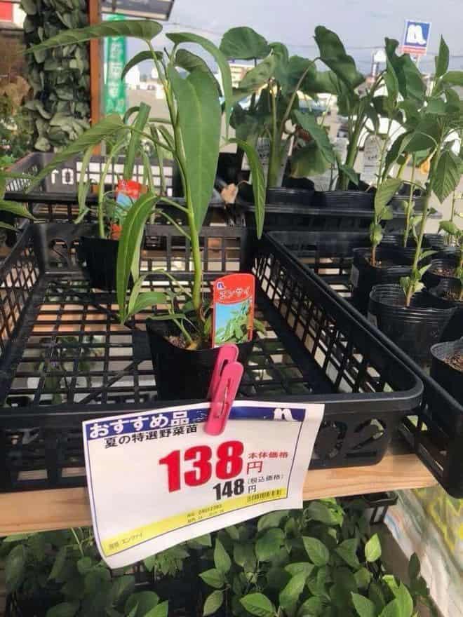 Hai chú mực một nắng to bằng con chấy có giá đến 4 triệu đồng trong siêu thị Nhật khiến dân mạng Việt xôn xao - Ảnh 6.