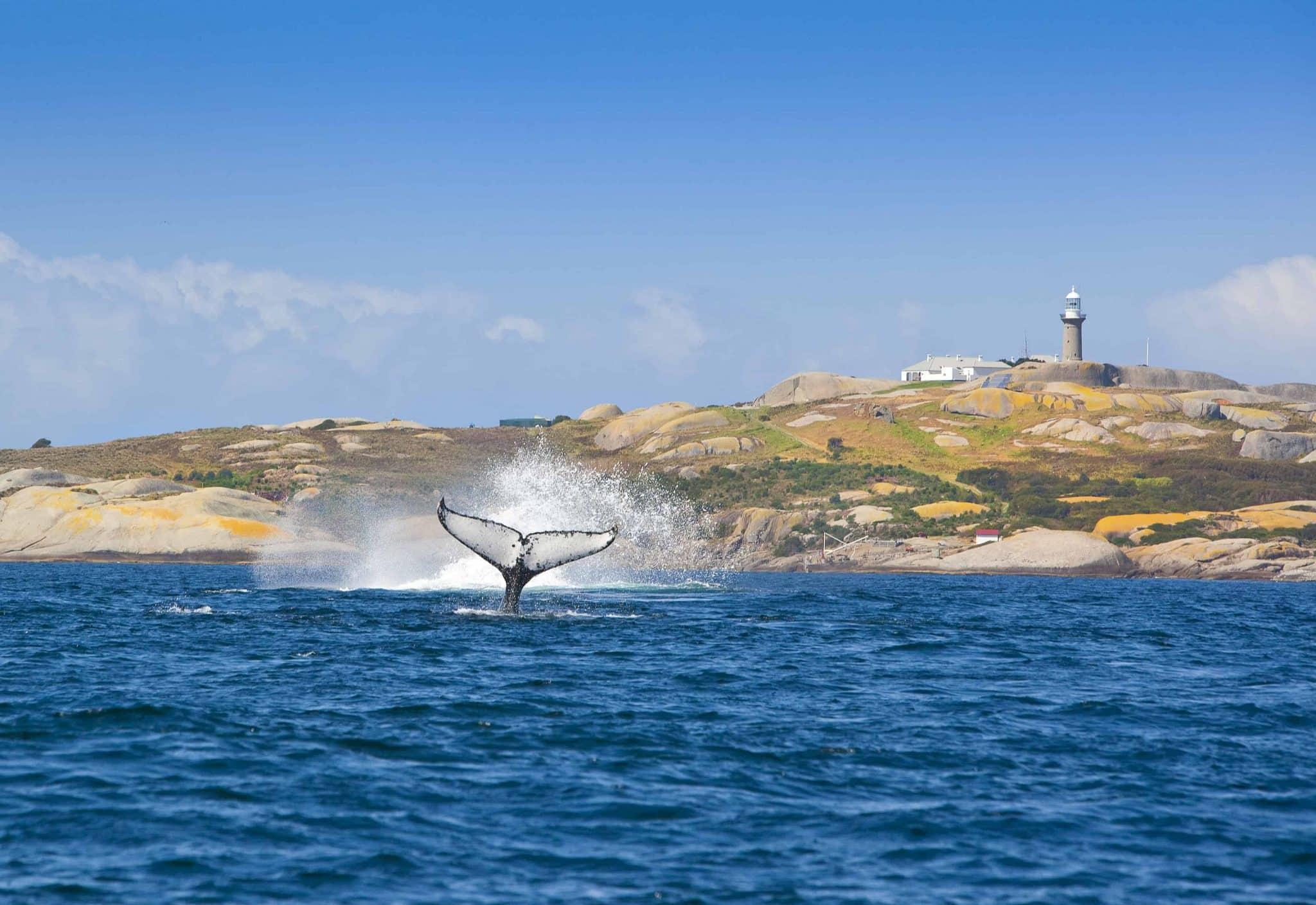 Săn cá voi tại NSW vào mùa đông