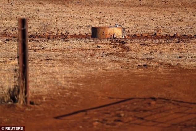 Úc: Khát khô cổ, hàng trăm con bò bủa vây xe tải chở nước trong đợt hạn hán khủng khiếp - Ảnh 5.