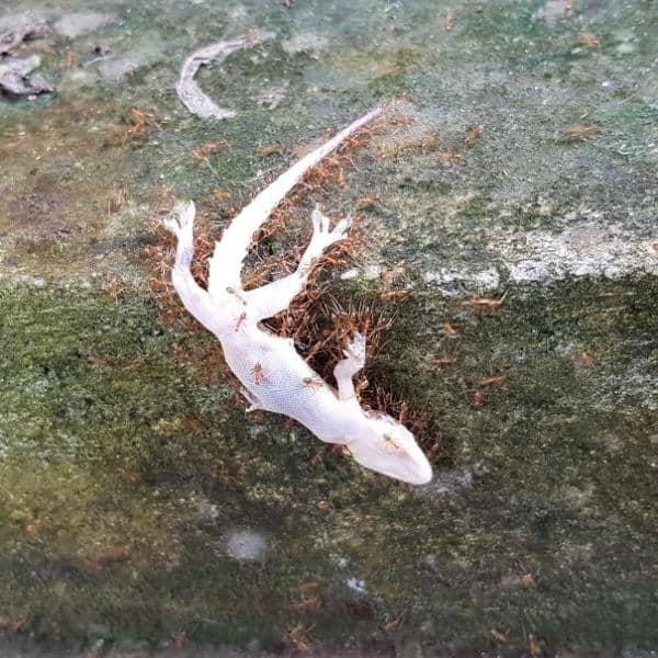 Những bằng chứng cho thấy thiên nhiên còn đáng sợ hơn cả phim kinh dị!