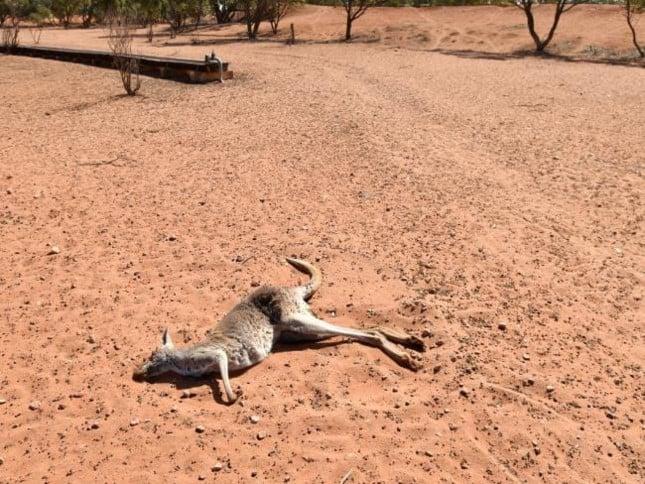 Kết quả hình ảnh cho Queen sends prayers to 'stoic and determined' Australian farmers facing tough drought