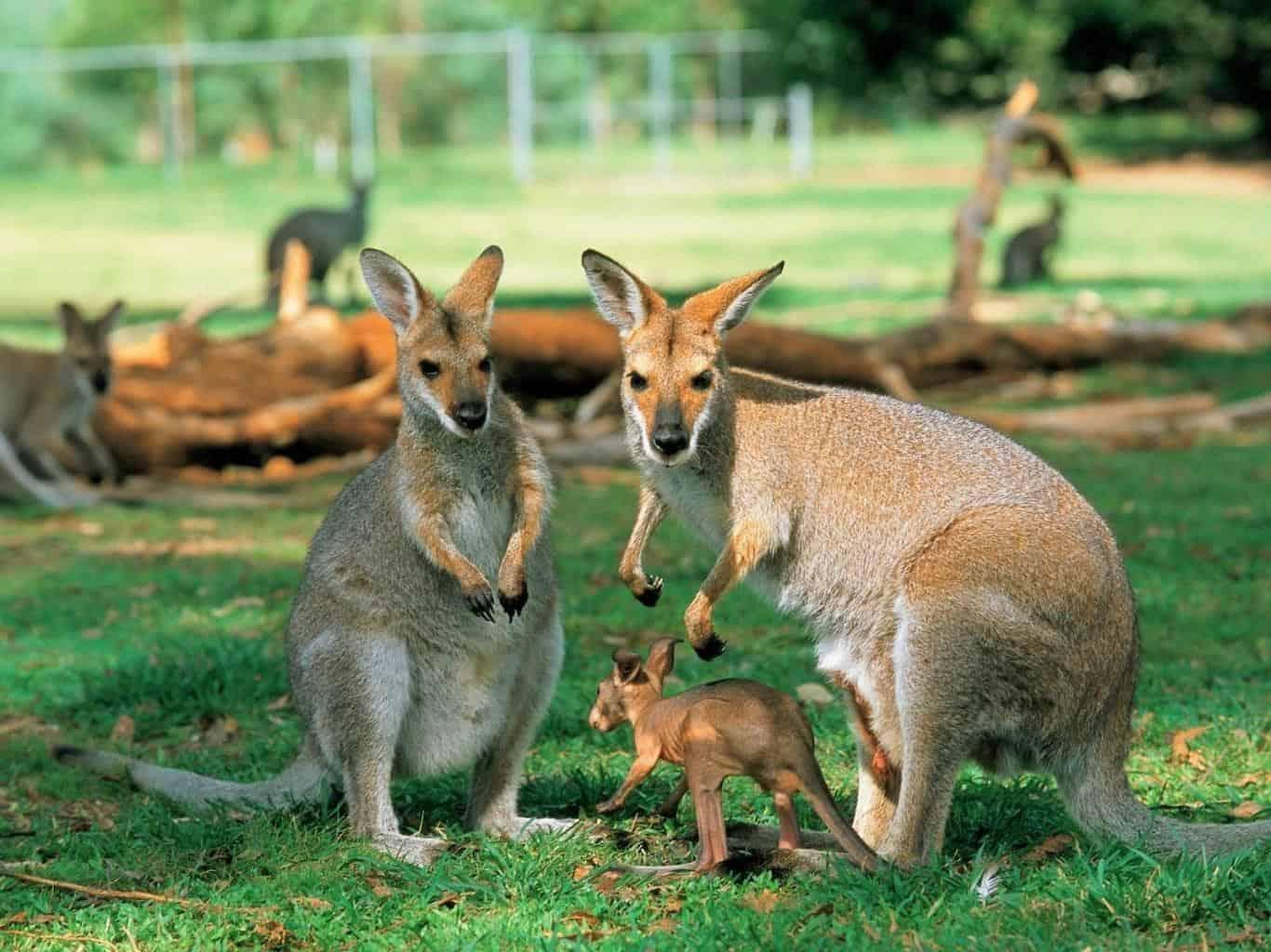 Nghe du học sinh kể những điều lầm tưởng về Úc mới thấy trước giờ ai cũng nghĩ sai về nước này - Ảnh 8.
