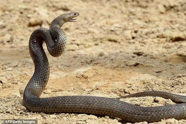 Một vườn thú ở Úc cho phép khách tham quan lấy tên người yêu cũ đặt cho rắn - Ảnh 1.