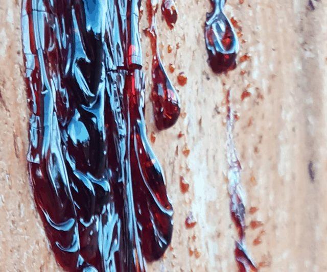 Kỳ lạ: Loài cây nguồn gốc từ Úc chảy máu giống con người - ảnh 2