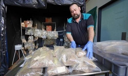 766kg ma túybị cảnh sát Queesland thu giữ . Ảnh: PA.