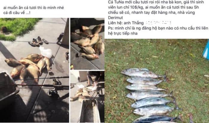 Một số quảng cáo bán cá câu được trên Facebook