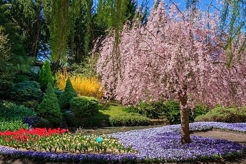 Nếu bạn là người yêu thích lễ hội hoa, sau khi tới Floriade, thì điểm tiếp theo nên dừng chân là Tulip Top Gardens, nằm ở ngoại ô thành phố. Ảnh: