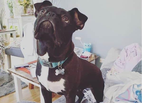 Chó cưng vô tình đốt nhà khiến chủ thiệt hại gần 1 tỷ đồng 1