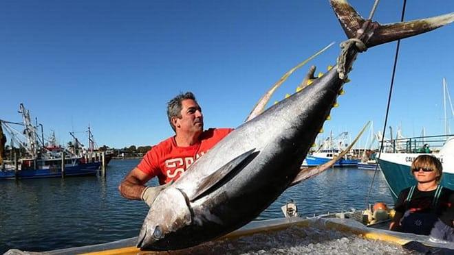 Úc 'giải cứu' thực phẩm xa xỉ, người dân được ăn bò wagyu, cá ngừ sashimi - ảnh 1