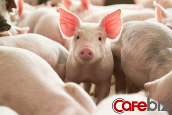 Bloomberg: Trong khi nhiều hãng bay lao đao vì dịch Covid-19, công ty hàng không này lại lãi lớn nhờ… chở lợn cho Trung Quốc - Ảnh 2.