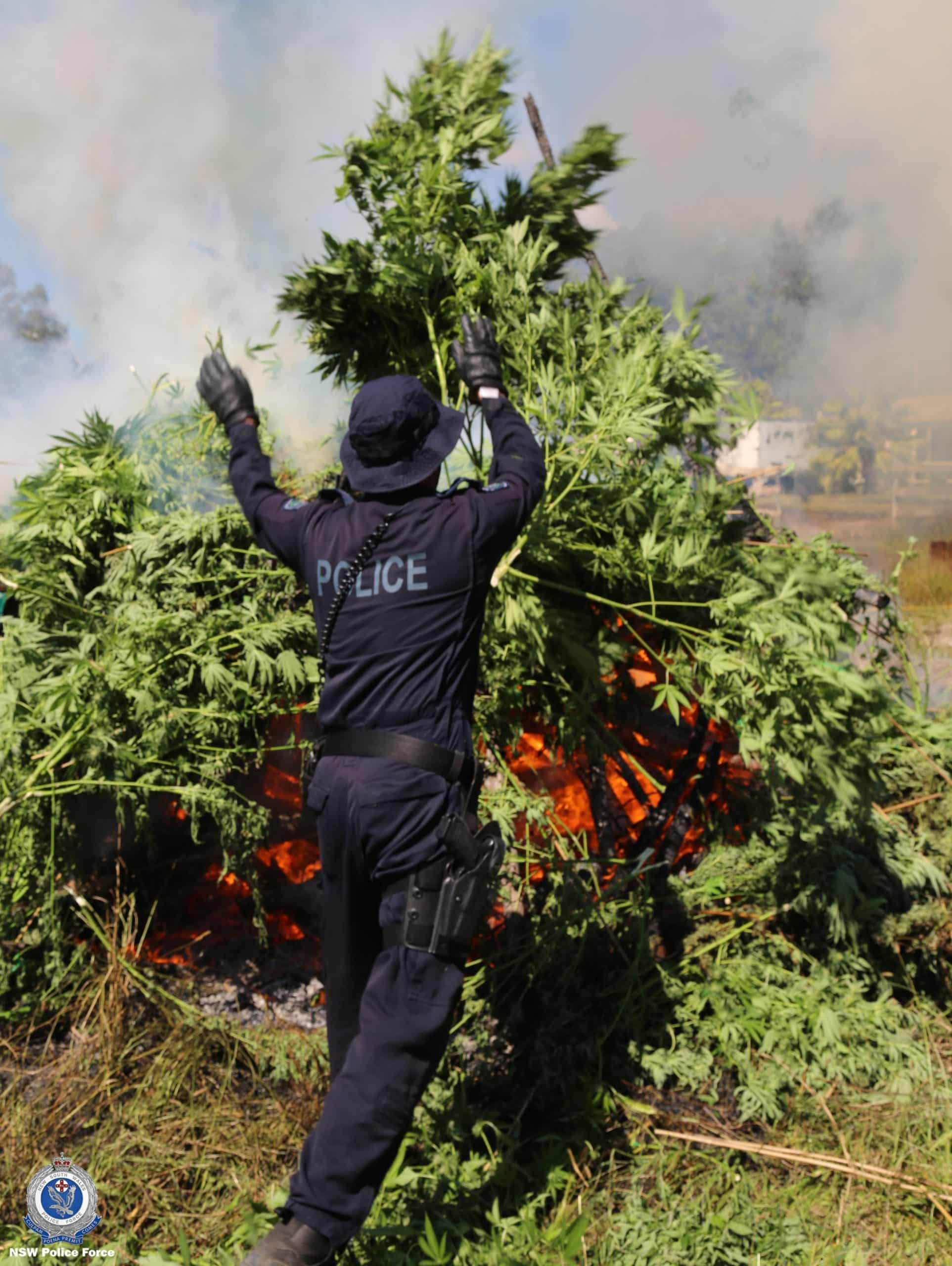 The seized plants were destroyed on site.